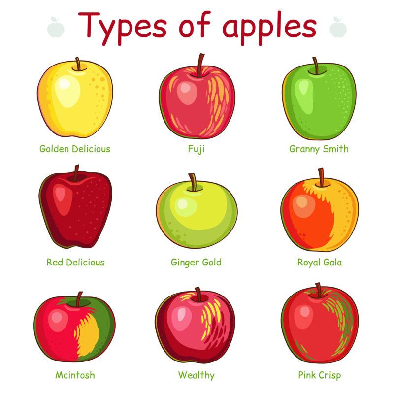 Types de pommes