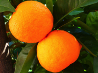 oranger amer
