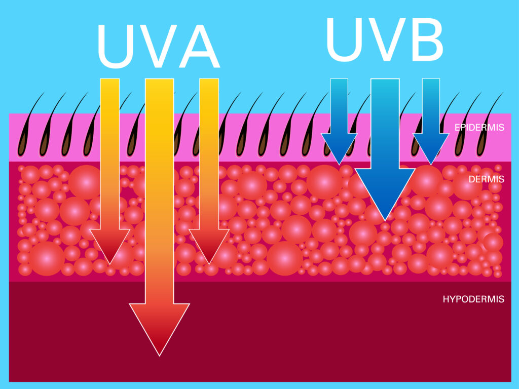 rayons UVA et UVB
