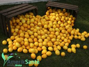 citron_article